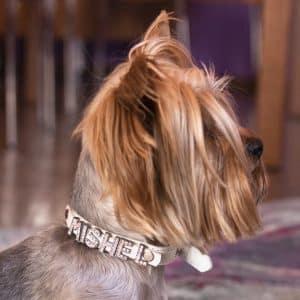 нашийник за куче с букви