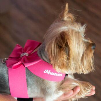 кучешки нагръдник с име